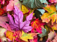 Happy fall! What fall a…