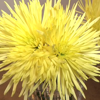 Make Fresh-Cut Flowers Last Longer - From #SheSpeaksTV
