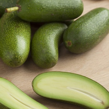 Avocado Lovers Have Something New To Savor in Pitless Avocados