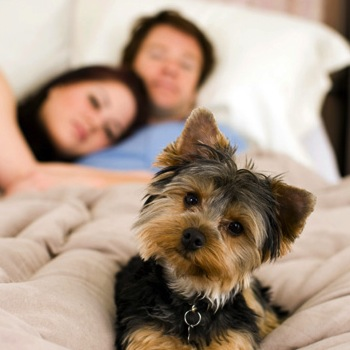 New Sleep Study Says, Make Some Room For the Pooch
