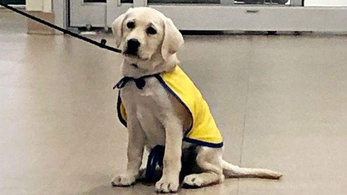 A Quick Cuddle Can Do Wonders: A Service Dog For Stressed Out Hospital Staff