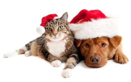 5 Holiday Health Hazards for Pets