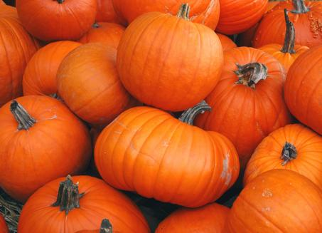 Do you have a passion for pumpkins?