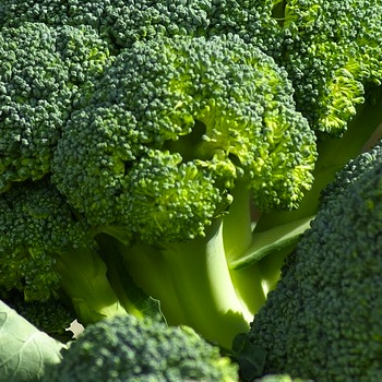 Broccoli May Slow the Aging Process, One More Reason To Eat Those Greens!