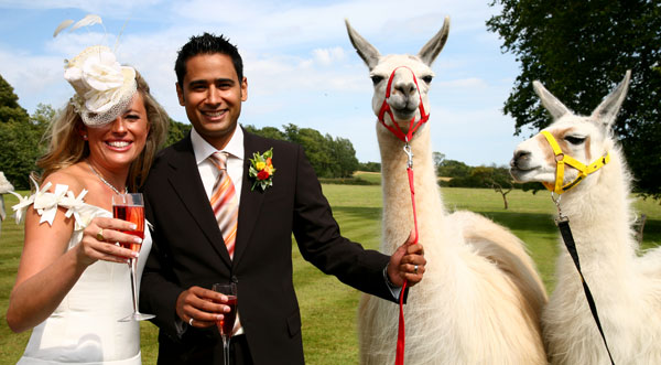 More Couples Include Wild Animals On Wedding Guest List